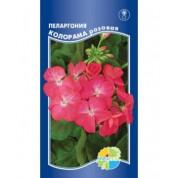 Пеларгония зональная Колорама розовая (Акварель)