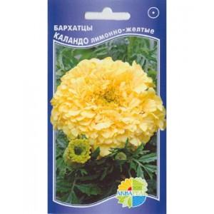 Бархатцы Каландо лимонно-желтые (Акварель)