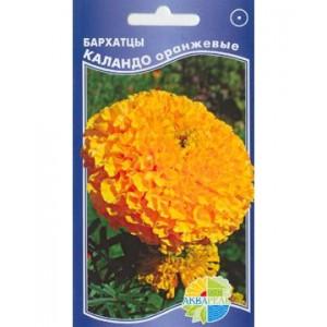 Бархатцы Каландо оранжевые (Акварель)
