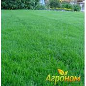Газонная трава Универсальная 10 кг Россия